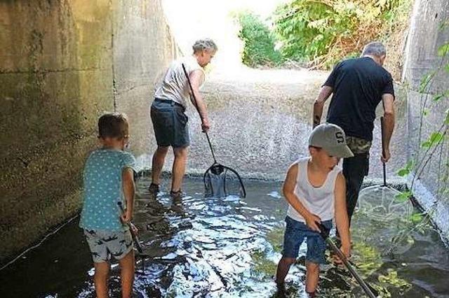 Anglerverein Heitersheim rettet 2000 Fische aus trockenem Sulzbach