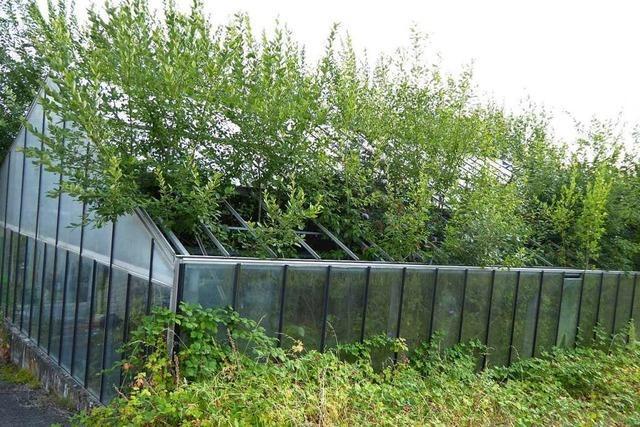 In Hauingen holt sich die Natur eine Gärtnerei zurück