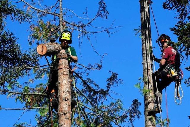 Warum Kletterschüler kostenlos Bäume im Müllheimer Hebelpark pflegen