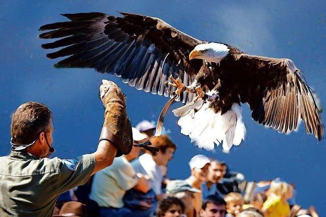 50 Prozent BZ-Card-Rabatt beim Vogelpark Steinen: 31. August bis 6. September