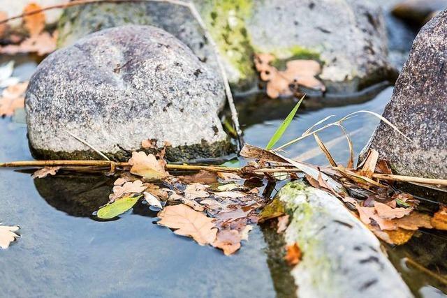 Landratsamt Waldshut verbietet das Abpumpen aus Gewässern