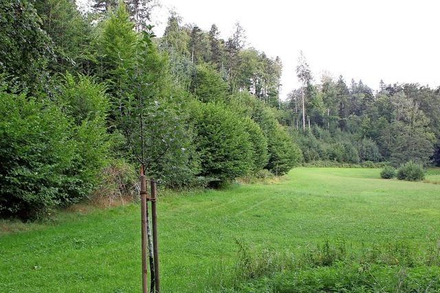 Stegen stimmt für Waldkindergarten