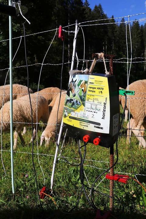 Freys Weidezaungerät regelt nicht nur ... sendet die Daten auch nach Stuttgart.  | Foto: Otto Schnekenburger