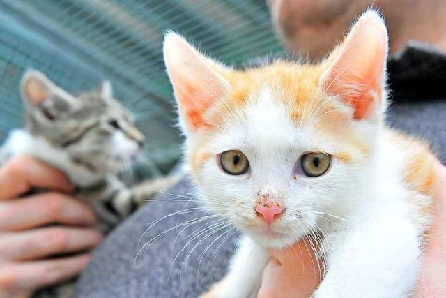 Animal Hoarding: Warum Menschen zu viele Tiere halten