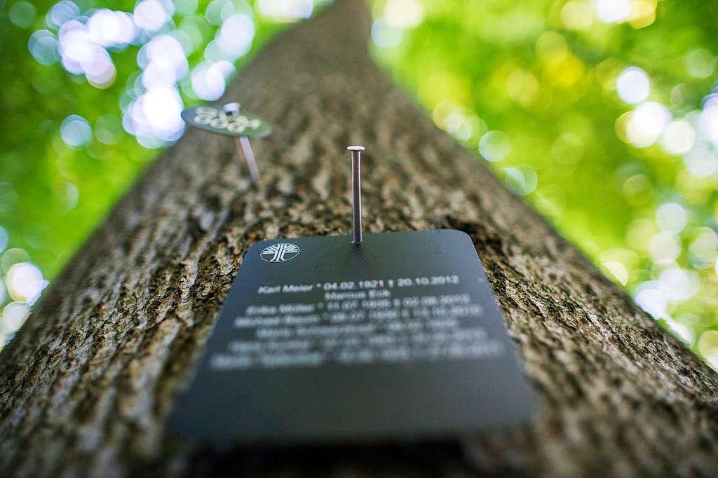 Freiburgs erster Bestattungswald könnte in Günterstal entstehen - Freiburg - Badische Zeitung