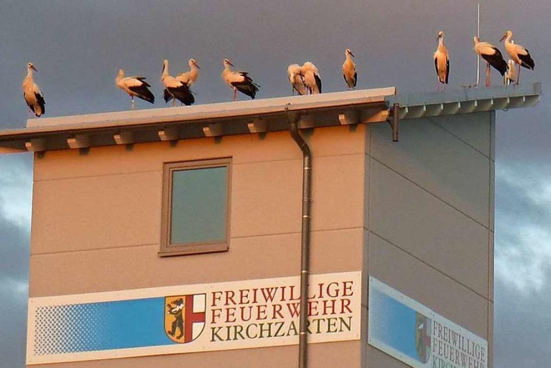 Jungstörche auf dem Feuerwehrgerätehaus in Kirchzarten.  | Foto: Volker Jung