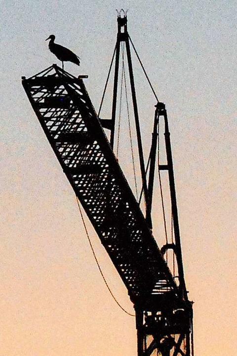 In luftiger Höhe eines Baukrans in Gun...n genießt dieser Storch die Fernsicht.  | Foto: Albert Rummler