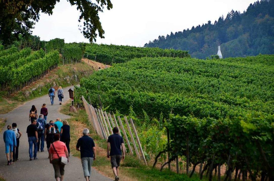 Kein Weinwandertag rings um Offenburg in diesem Jahr.   | Foto: Ralf Burgmaier