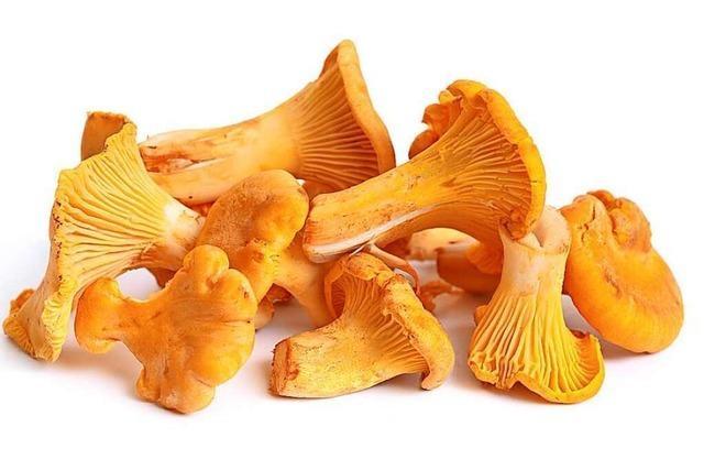 Pfifferlinge sind Pilze für die gute Laune