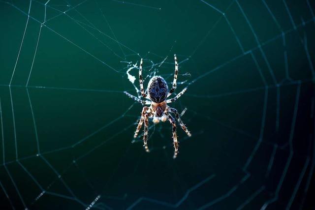 Wie lange kann eine Spinne ohne Nahrung überleben?