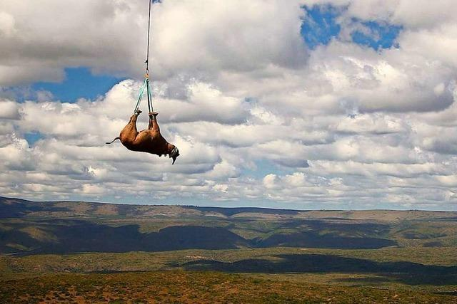 Verschafft die Pandemie Wilderern freie Bahn?