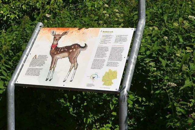Unterwegs mit Hirschkalb Karla auf dem Wildtierpfad in Häusern