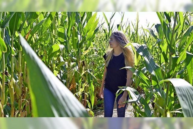 Das Maisfeld-Labyrinth in Opfingen ist Nervenkitzel für die ganze Familie