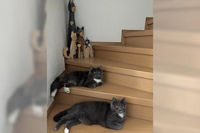 Entspannte Katzen sind die Gewinner