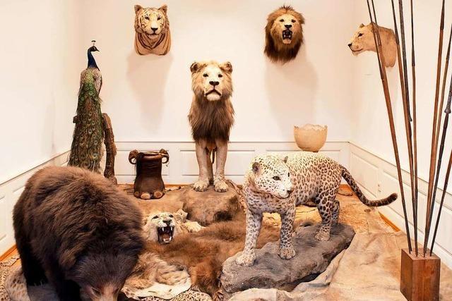 Das Offenburger Museum im Ritterhaus setzt auf Interaktion