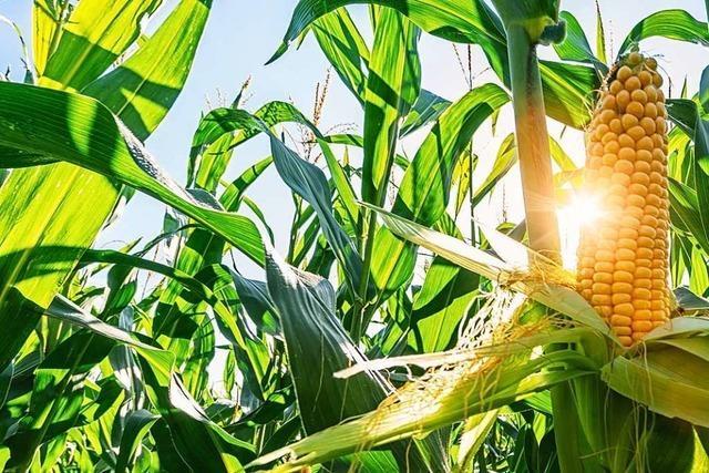 Wie lassen sich gewinnbringende Landwirtschaft und Artenschutz vereinbaren?