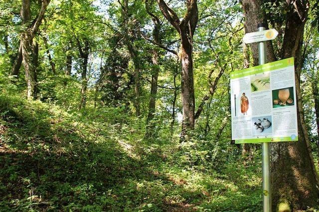Neue Schilder informieren auf dem Castellbergpfad bei Ballrechten-Dottingen