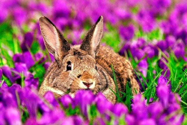 Mindestens 100 Tiere sind in Freiburg bereits an der Kaninchenpest gestorben