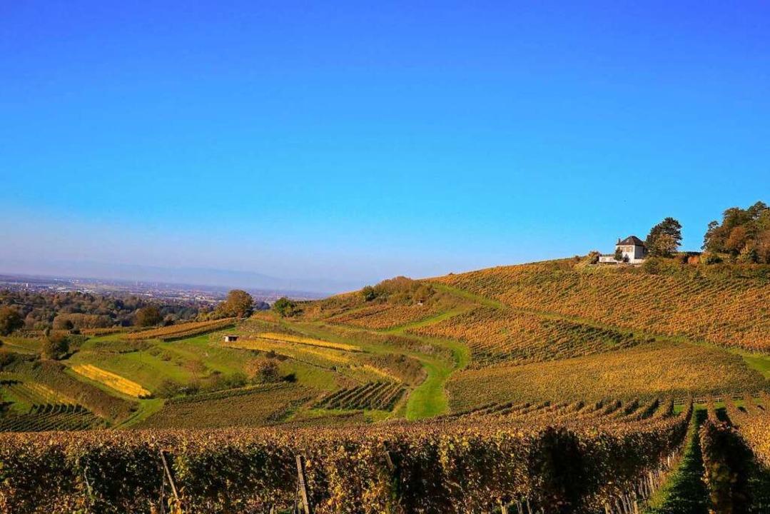 Gruß aus Kippenheim  | Foto: Sandra Decoux-Kone