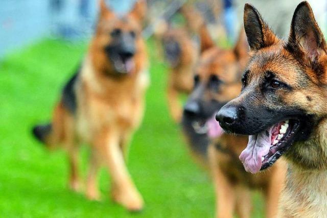 Polizei tötet Schäferhund nach Attacke auf Tiertrainer