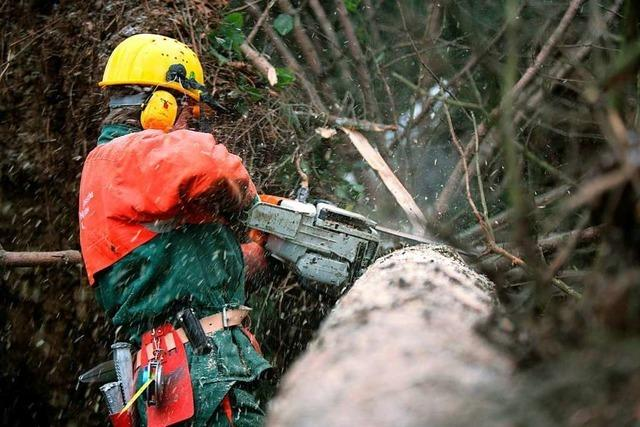 Waldarbeiter erleidet bei Baumfällung in Tunau schwere Beinverletzungen