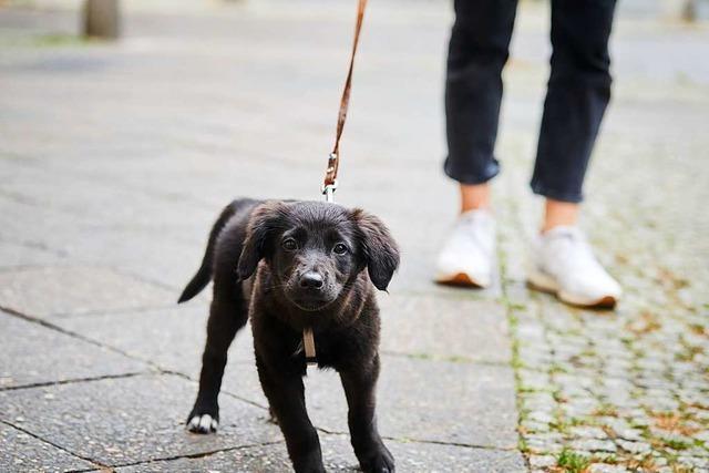 Warum muss man mit Hunden Gassi gehen?