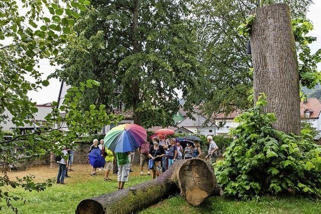 Mehr als 3000 Bäume stehen und wachsen im Stadtgebiet