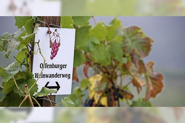 Der Offenburger Weinwanderweg schlängelt sich neun Kilometer durch die Reben