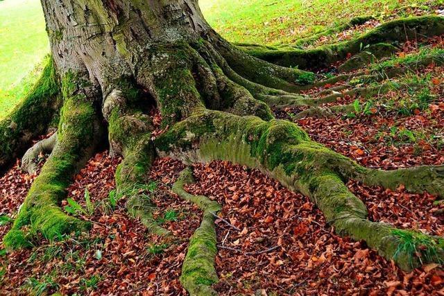 Bäume pflanzen kann in Lörrach kompliziert werden