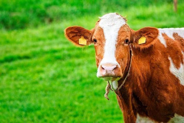 Können Tiere weinen wie wir Menschen?