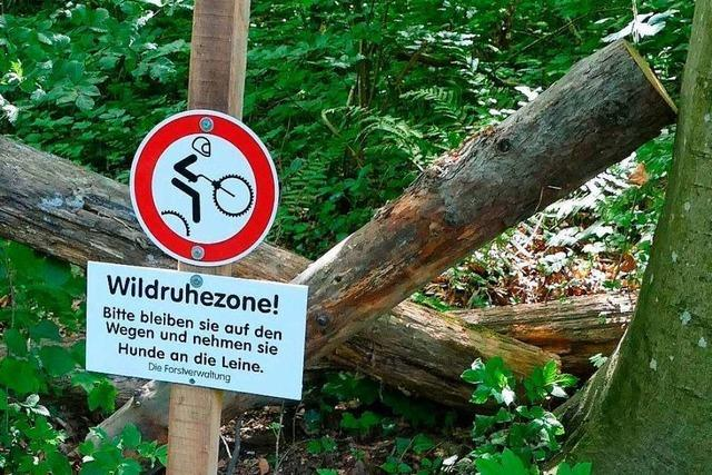 Egringer Jugendliche wünschen sich weiterhin einen Trail im Wald