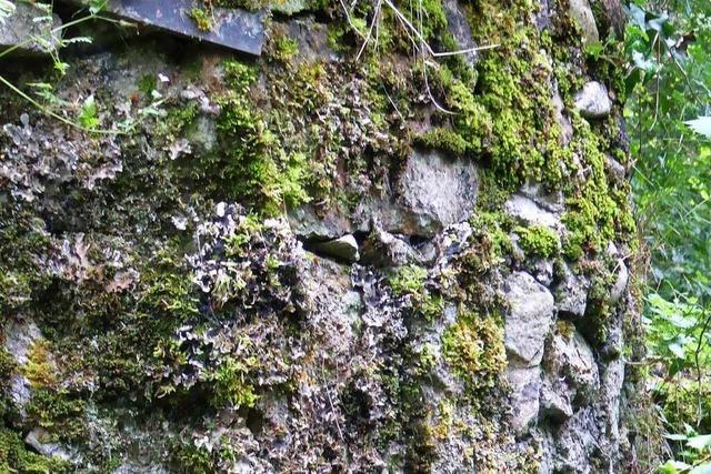 Heimatforscher entdecken Spuren einer Burg bei Bürchau