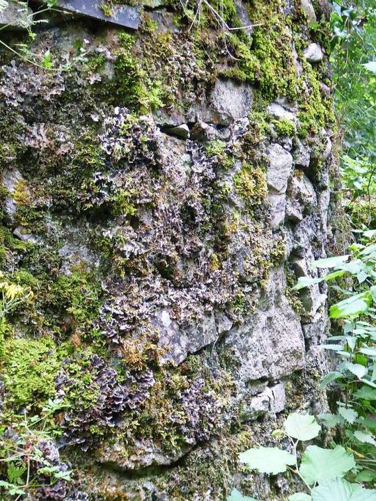Die Bruchsteinmauer ist fast das Einzi... der einstigen Burg noch erhalten ist.  | Foto: privat