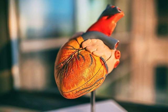 Forscher: Coronavirus kann den Herzmuskel beeinträchtigen