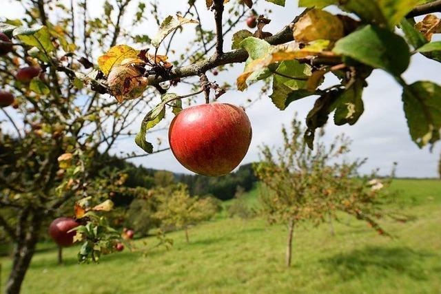 Fachwarte für Obst und Garten kümmern sich um den Erhalt von Streuobstwiesen