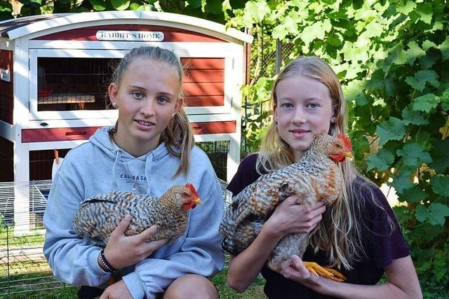 14-Jährige aus Schallstadt sucht Zuhause für ihre pubertierenden Hähne