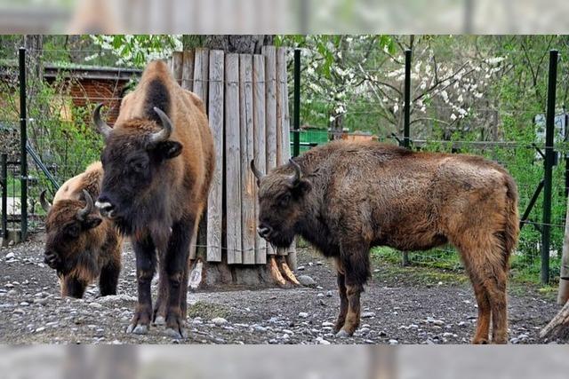Im Tierpark Lange Erlen in Basel gibt vom Aussterben bedroht Arten