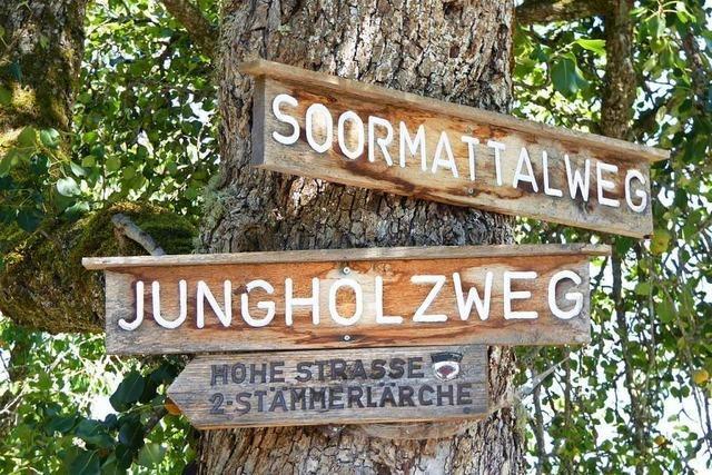 Hauinger Wald bietet Ausflugsziele für Spaziergänger und Wanderer