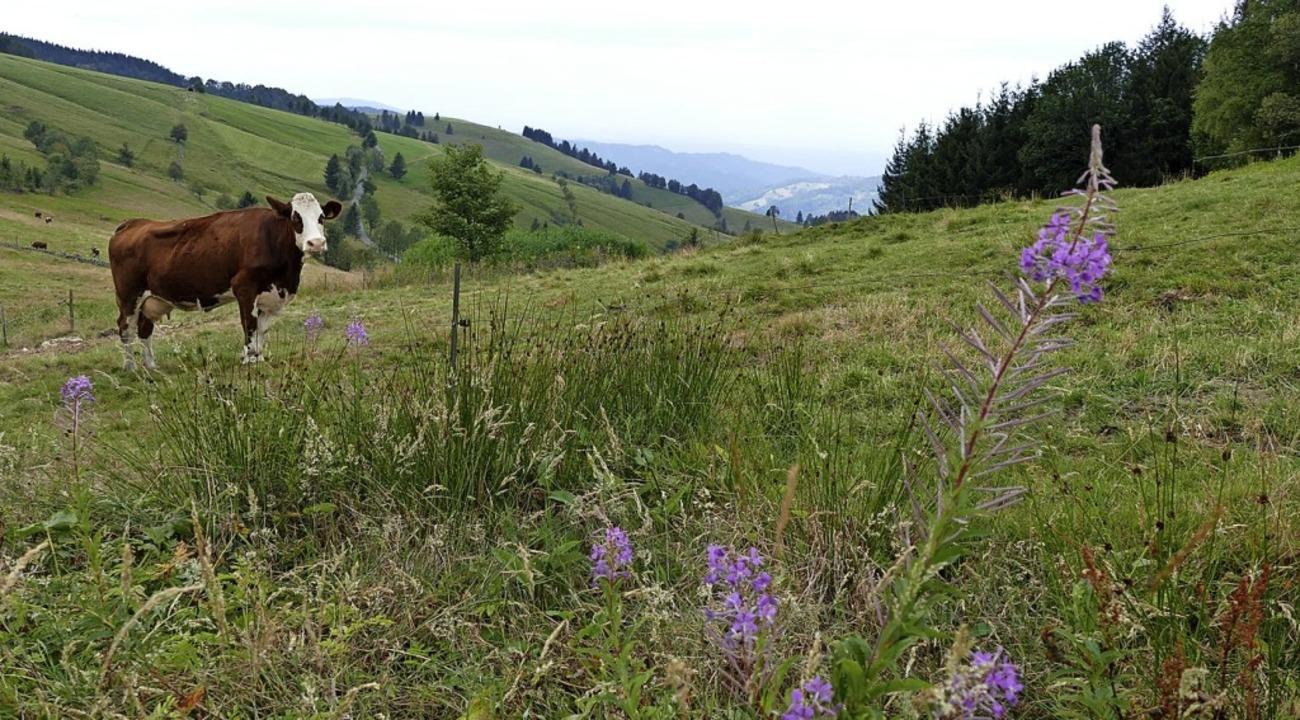Nur einige Pflanzen, die sich wie ein ...dem Schauinsland auf 1150 Metern hin.   | Foto: Frank Schoch