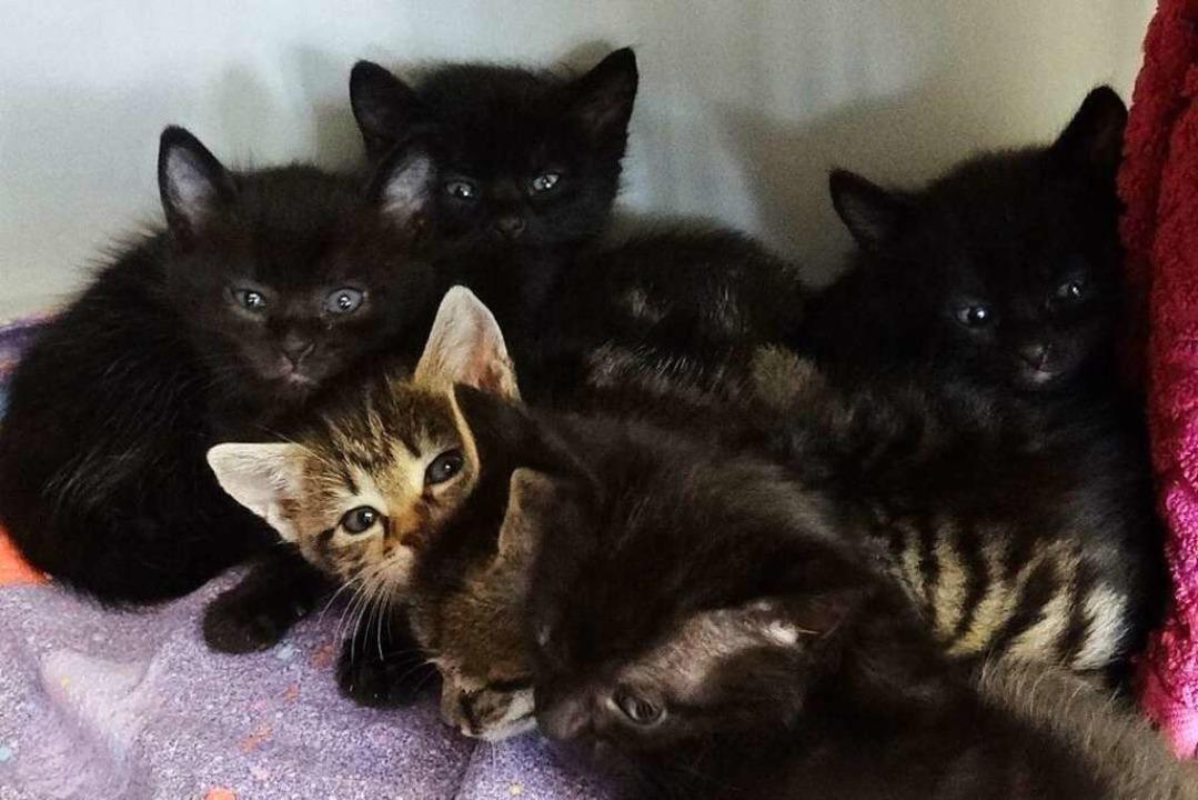 Eine ganze Herde kleiner Katzen gibt es im Tierheim.  | Foto: Tierheim