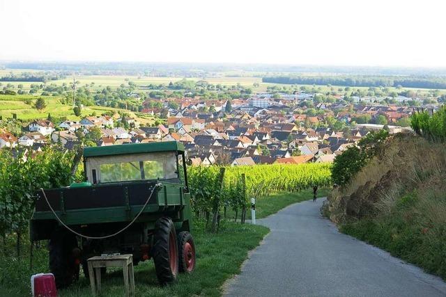 Kurze Wandertour in den Weinbergen von Ihringen