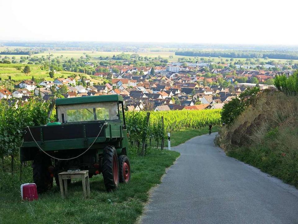 Auf und ab führt der Winzerrundweg Ost durch die Rebterrassen von Ihringen.  | Foto: Claudia Müller