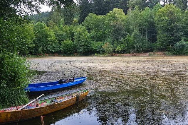 40 Zentimeter unter Normalwert: Der Hohbergsee verliert Wasser