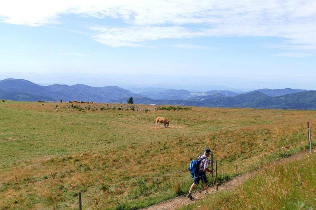 Beliebt bei Einheimischen und Touristen: der Belchensteig.    Foto: Sarah Trinler