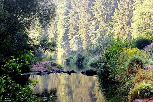 Der Tourismusverein Kleines Wiesental richtet den neuen Sagenweg her