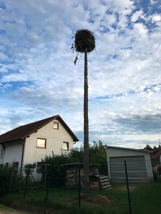 Für das Storchennest im Bad Bellinger ...ingen wird ein neuer Standort gesucht.  | Foto: Jutta Schütz
