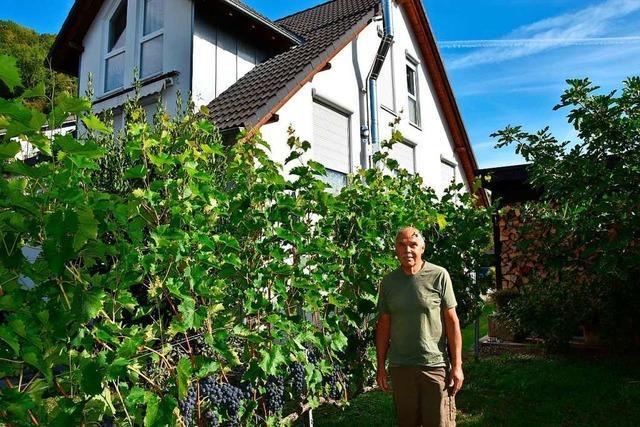 Winzer Josef Vogt aus Herten nutzt Reben als Gartenumzäunung