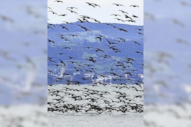 Vogelzug-Saison geht los