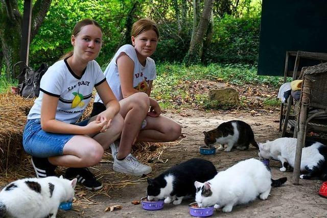 Zwei Schwestern aus Lahr-Mietersheim kümmern sich um eine Katzenkolonie
