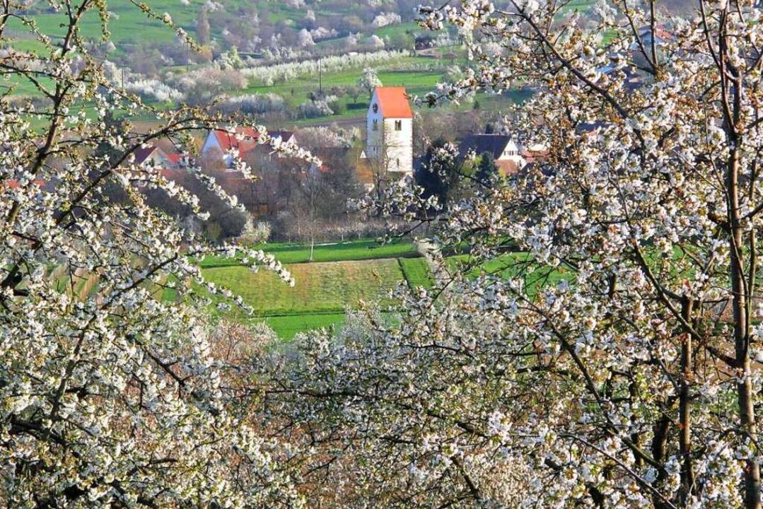 Im April lockt die Kirschblüte ins Eggenertal.  | Foto: Jutta Schütz
